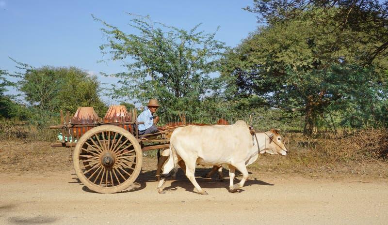Chariot birman de boeuf d'équitation d'homme à la ville antique dans Bagan images libres de droits
