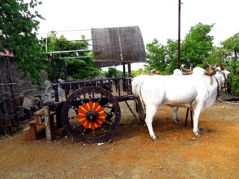 Chariot de Bullock d'Indien photos stock