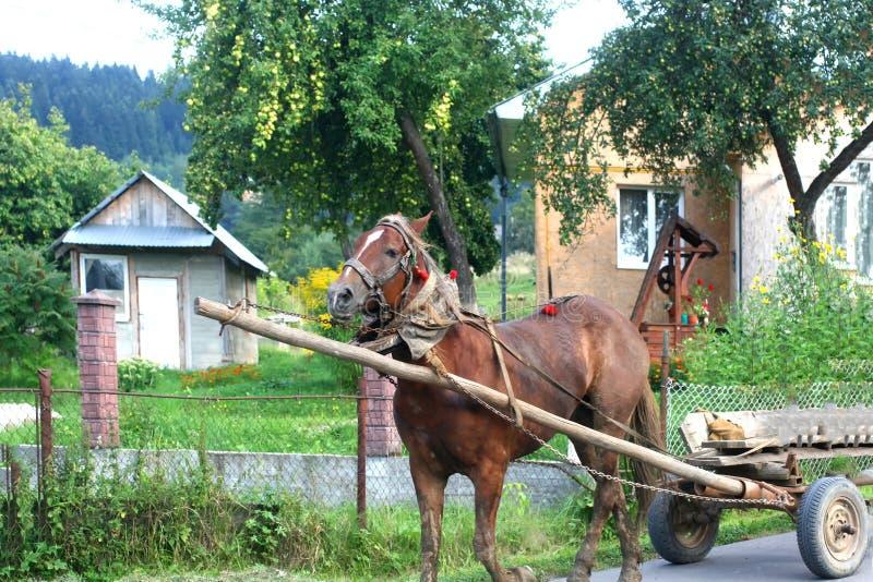 Chariot dessiné par un cheval Secteur scénique suburbain image libre de droits