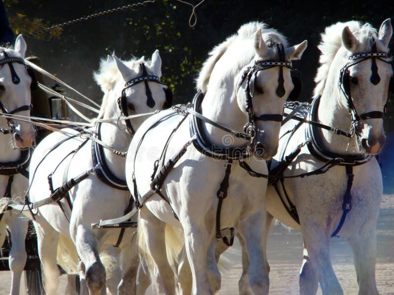 Chariot et blanc quatre photos stock