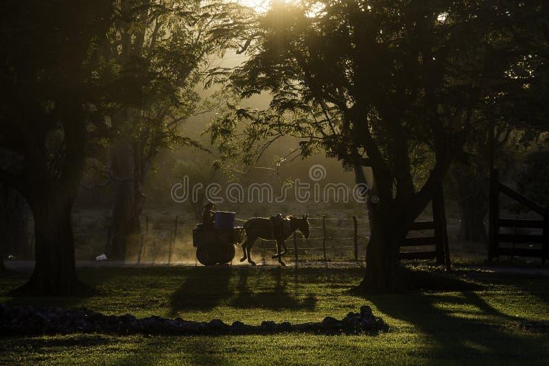 Chariot et cheval au coucher du soleil silhouettés parmi des arbres, Cuba images stock