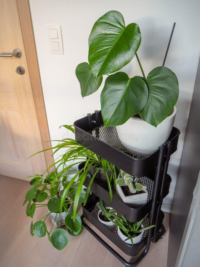 Chariot gris industriel rempli avec diff?rentes plantes vertes cr?ant un jardin vertical d'int?rieur photo libre de droits