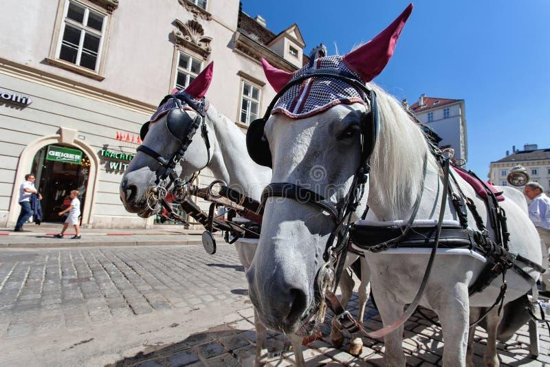 Chariot hippomobile à la cathédrale, Stephansplatz - la place principale de Vienne, centre de la ville historique, Vienne, Autric images libres de droits
