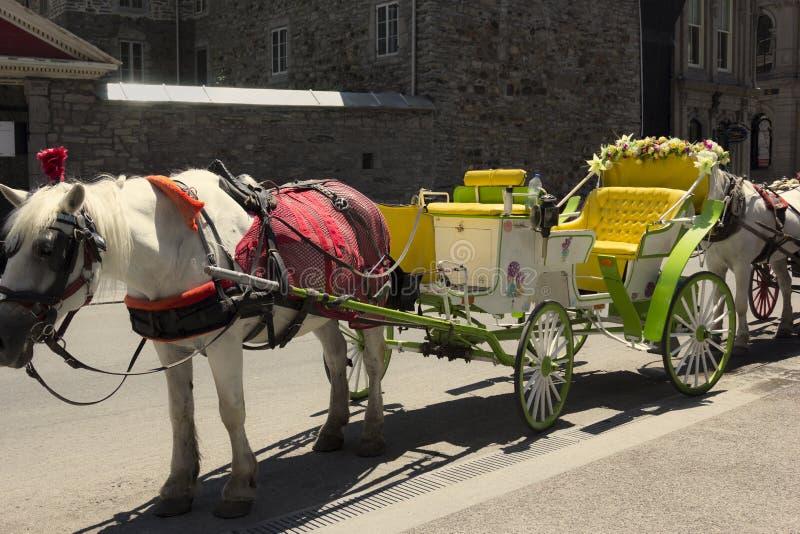Chariot hippomobile à Montréal image stock