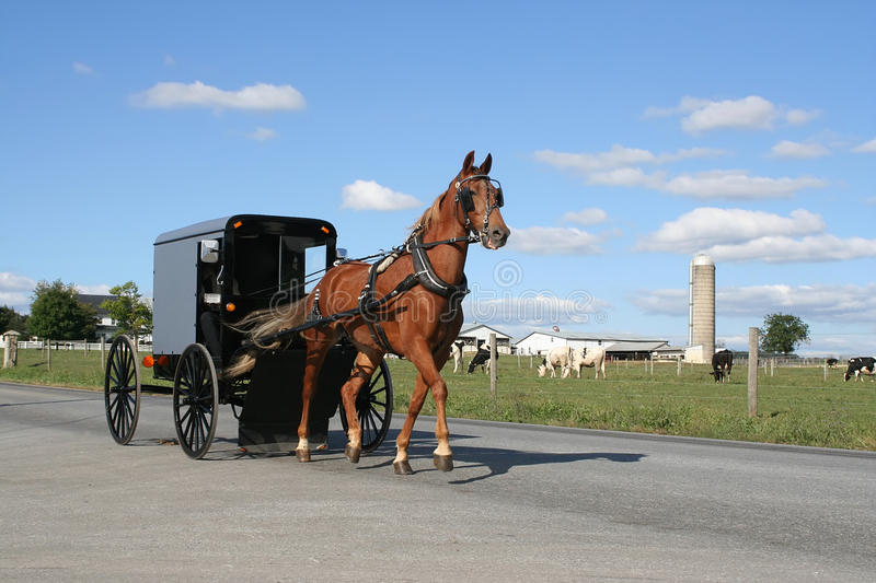 Chariot hippomobile amish image stock