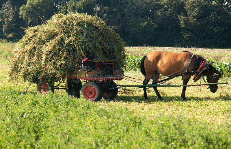 Chariot hippomobile avec le foin photographie stock libre de droits