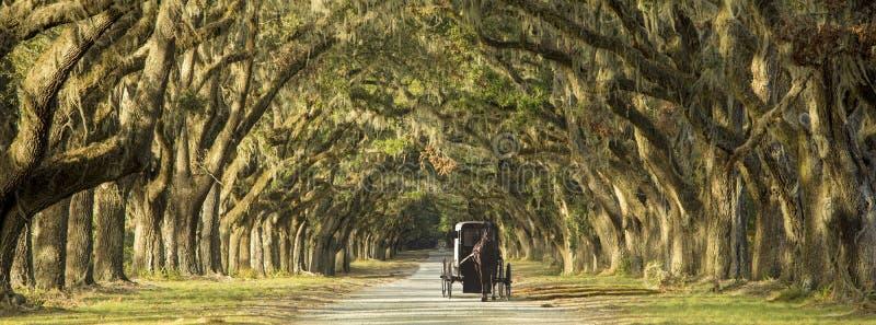 Chariot hippomobile sur la plantation image libre de droits