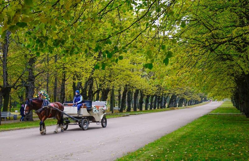 Chariot hippomobile sur la route d'automne images stock