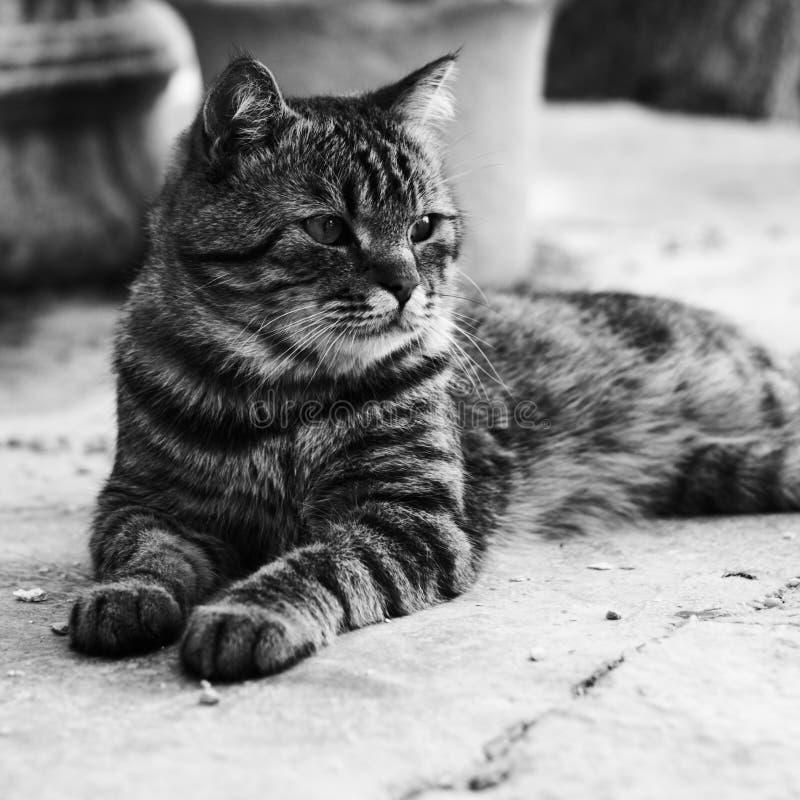 Charismatische kat stock afbeelding