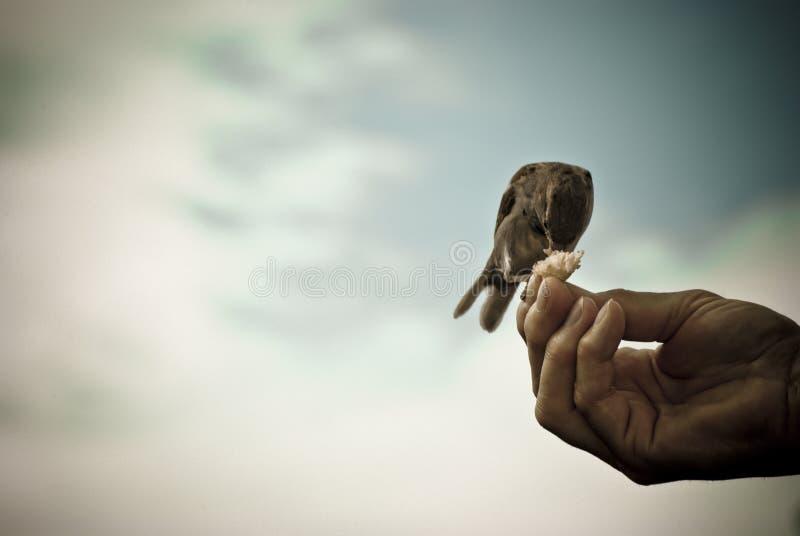 Bird of pray stock photo