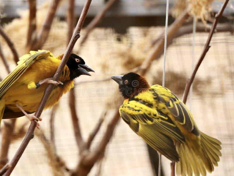 Charla de pájaros imagen de archivo