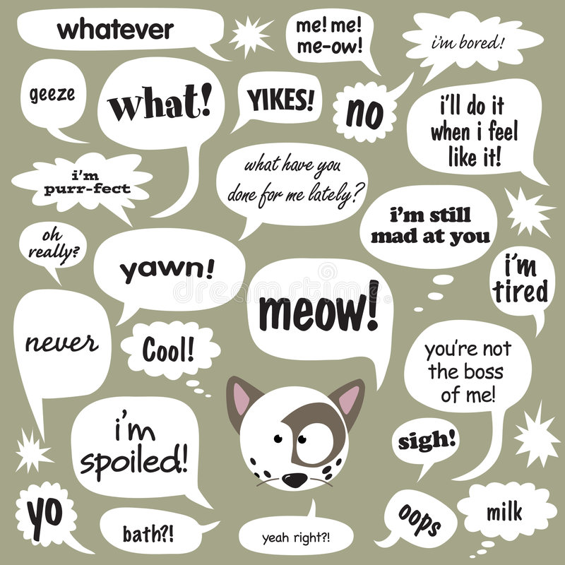 charla del gato