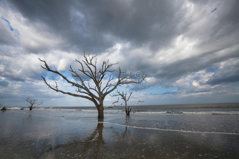 Charleston Boneyard Beach Botany Bay Edisto SC stock photography