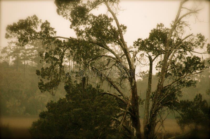 charleston lowcountry стоковая фотография