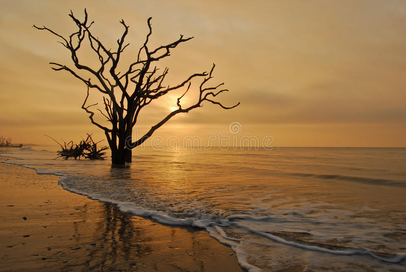 Charleston, SC Boneyard Beach Botany Bay. Trees line the surf at the spectacular Boneyard Beach at the Botany Bay Plantation Wildlife Management Area on Edisto royalty free stock photography
