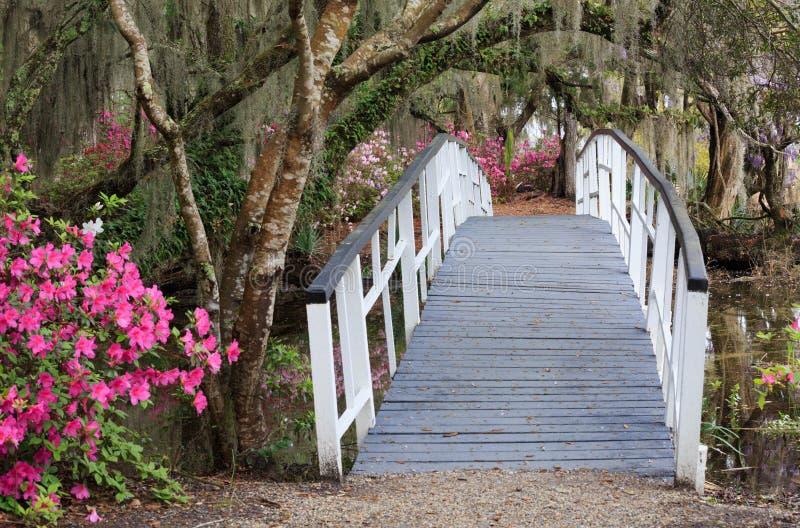 Am Charleston Sc-Magnolien-Garten im Frühjahr kreuzen stockfoto