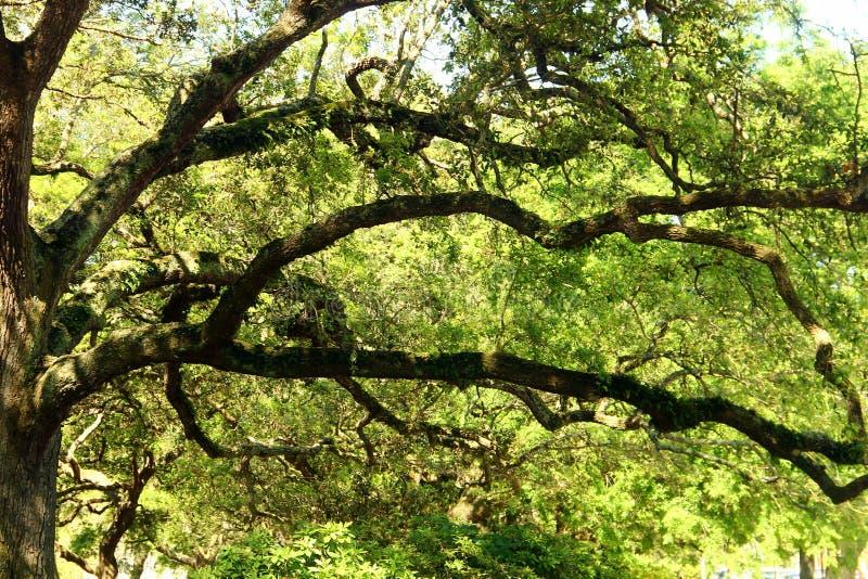 Charleston - South Carolina imagem de stock royalty free