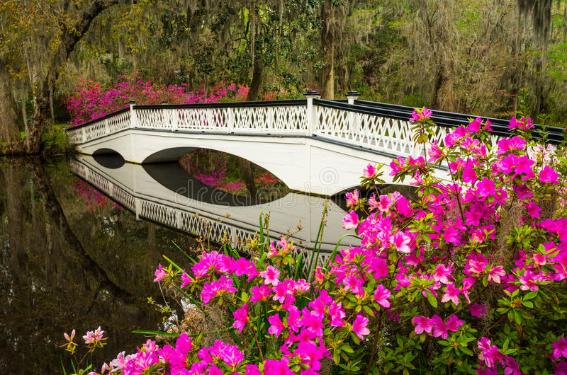 Charleston South Carolina Spring Flowers som blommar SC royaltyfria bilder