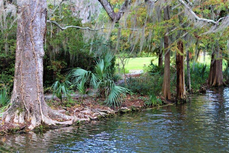 Charleston Wilderness Swamp fotografia stock