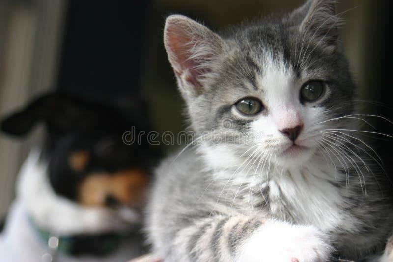 Charlie das Kätzchen lizenzfreie stockfotografie