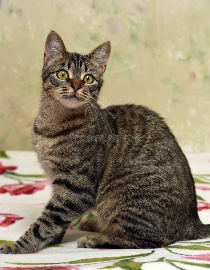 Download Charma den randiga katten fotografering för bildbyråer. Bild av framsida - 76702367