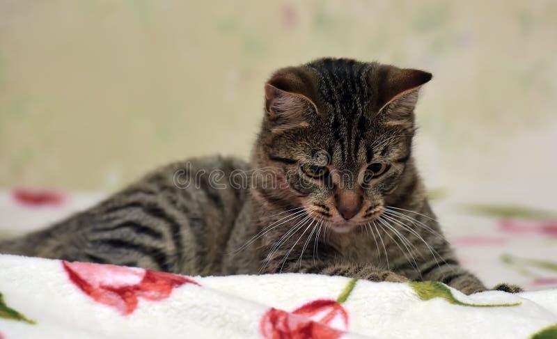 Download Charma den randiga katten arkivfoto. Bild av intresserat - 76702442