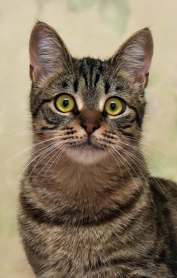 Download Charma den randiga katten fotografering för bildbyråer. Bild av jordluckrare - 76702469