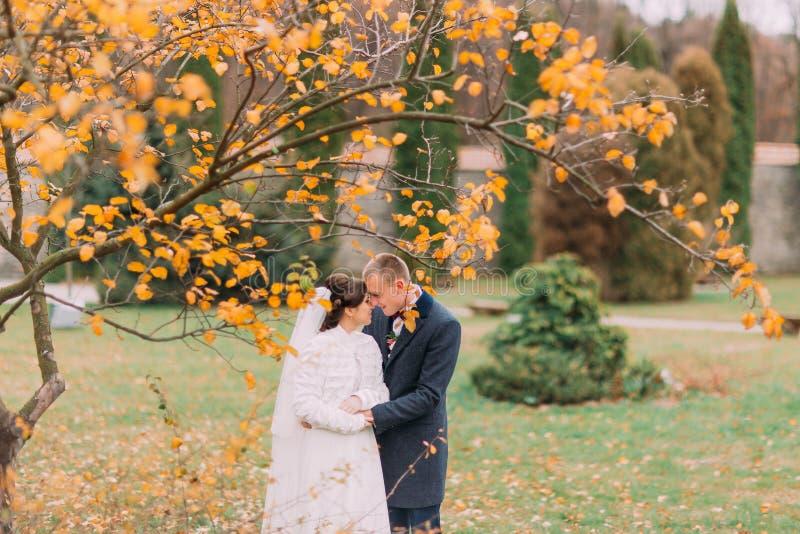 Charmant juste les ménages mariés embrassant pendant le bel automne se garent sous l'arbre avec les feuilles jaunes photo libre de droits