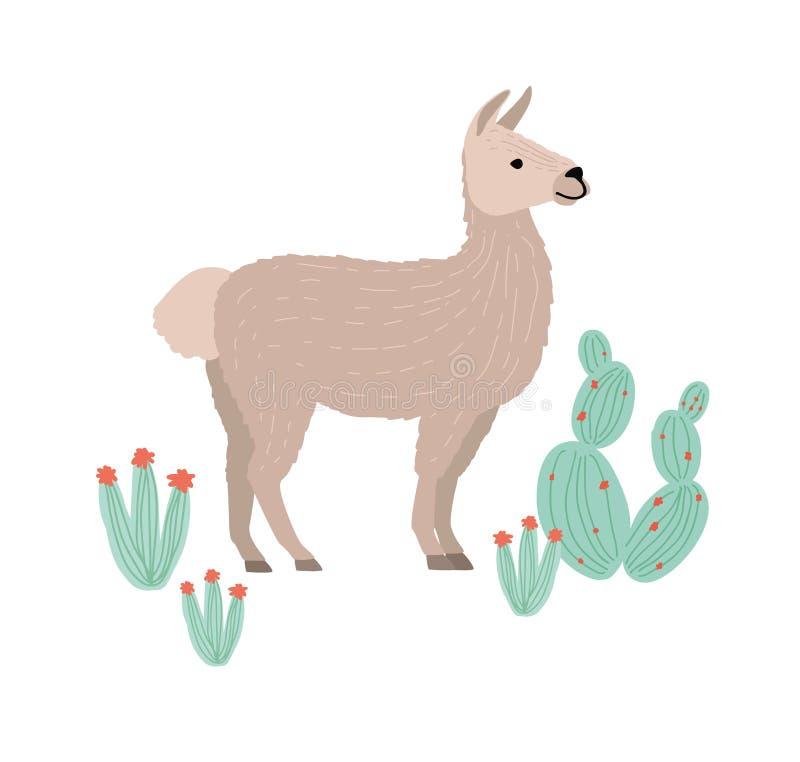 Charmante die lama, cria of alpaca op witte achtergrond wordt geïsoleerd Het grappige landbouwbedrijf Zuidamerikaanse dierlijke w vector illustratie