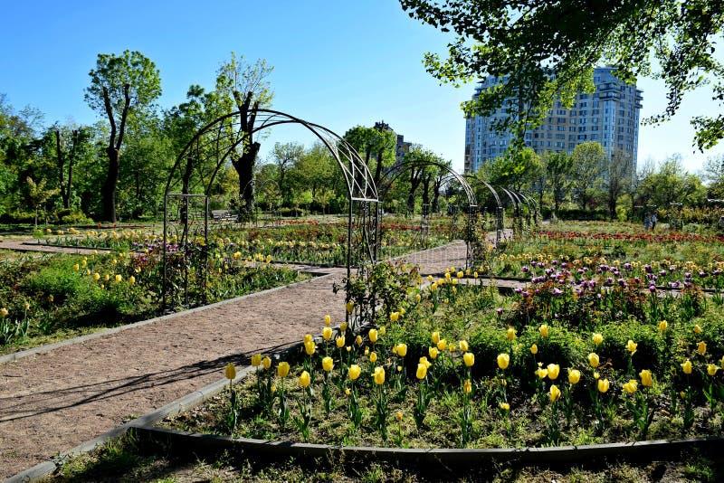 Charmante tuin met tulpen stock fotografie