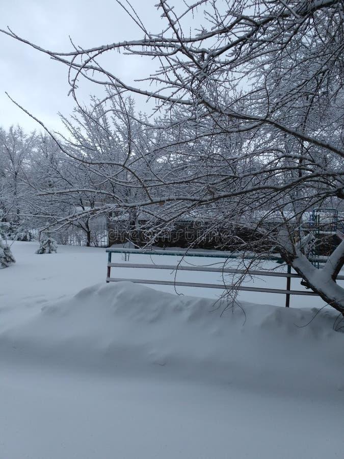 Charme d'hiver image libre de droits