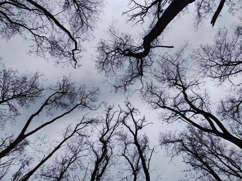 charme de la forêt photos libres de droits