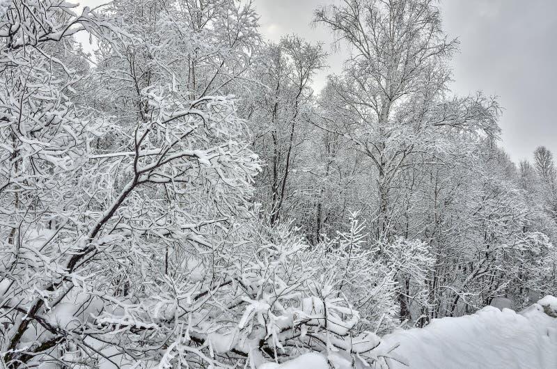 Charme du paysage d'hiver - branches noires des arbres couverts images stock