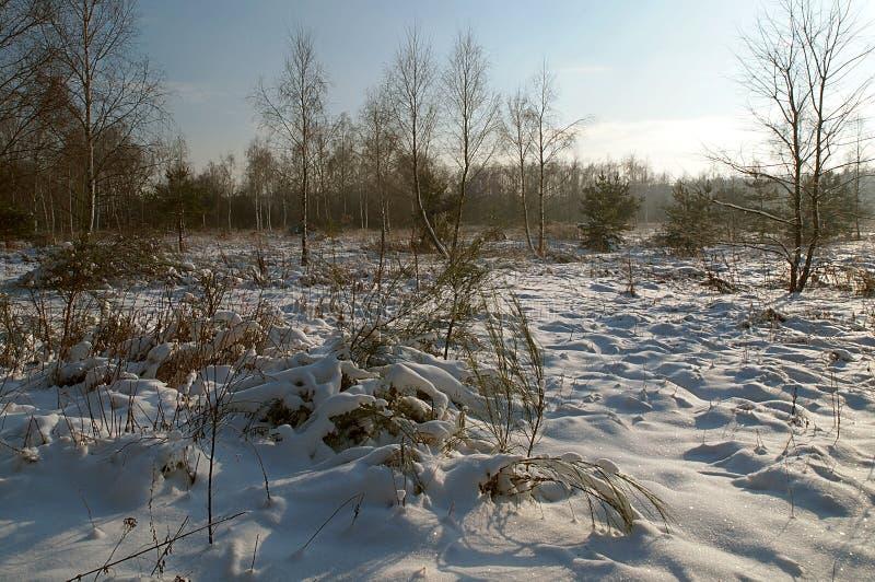 Charme ensoleillé d'hiver image libre de droits