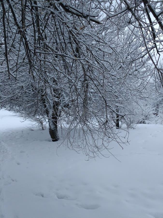 Charme et hiver photo stock