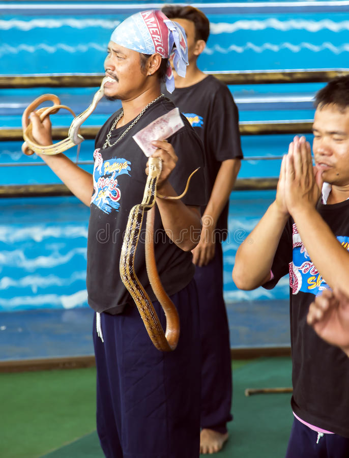 Charmer of snake on attraction. THAILAND, BANGKOK, MARCH, 26, 2015 - Charmer of snake on attraction in Million Years Stone Park & Pattaya Crocodile Farm in stock photo