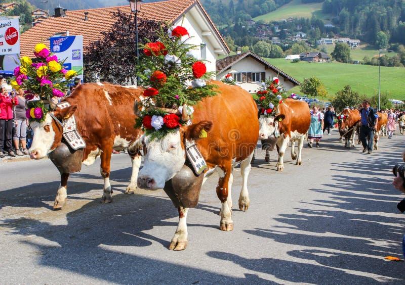 CHARMEY, DIE SCHWEIZ - 29. SEPTEMBER 2018: Kühe verziert mit den Blumen, die auf die Straße von Charmey an jährlichem Desalpe-Fes lizenzfreie stockfotos