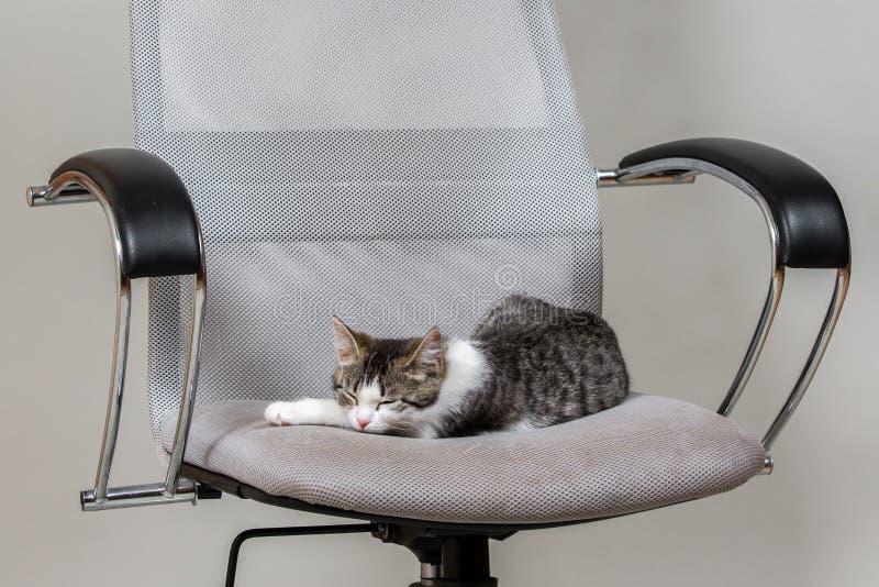 Charmig kattunge på den moderna kontorsstolen arkivbild