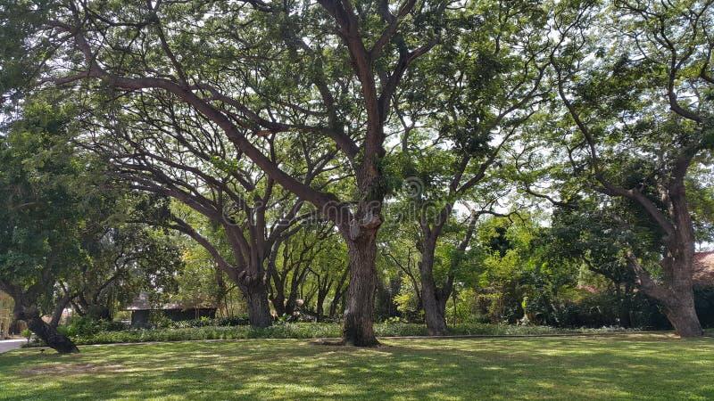 Charmig trädgård royaltyfri bild