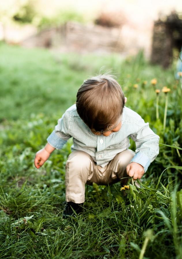 Charming baby boy in the green high grass stock photos