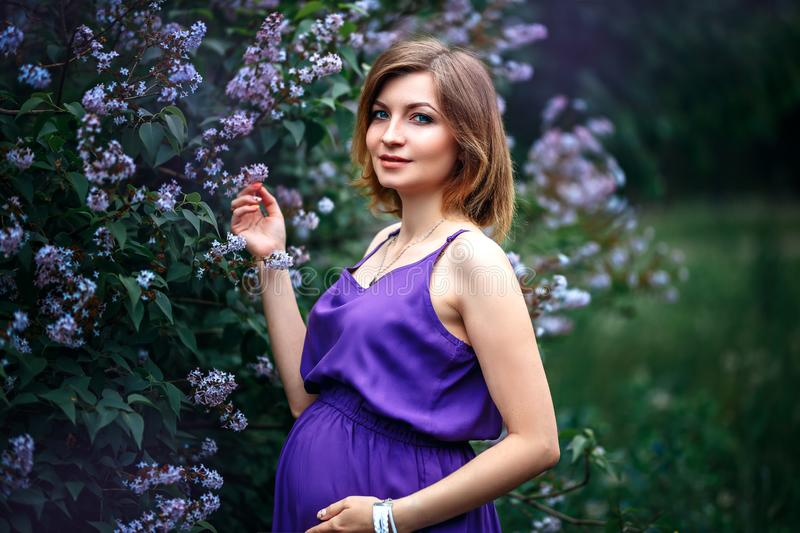 A charming beautiful young pregnant woman in purple violet dress in a blooming lilac garden looks at camera with tenderness. stock image
