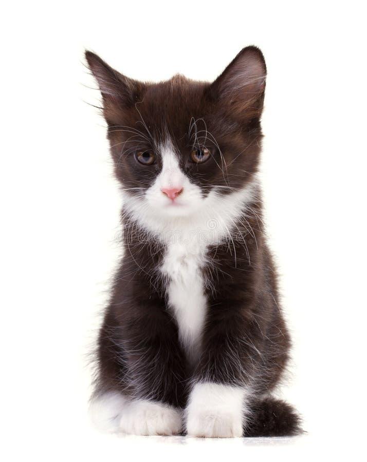 Charming black-and-white kitten stock photos
