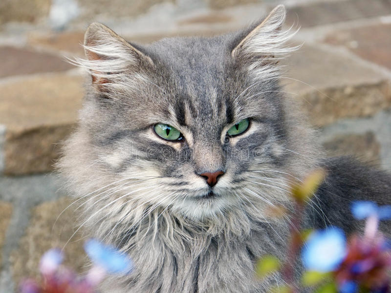 Charming cat in flowers stock photos