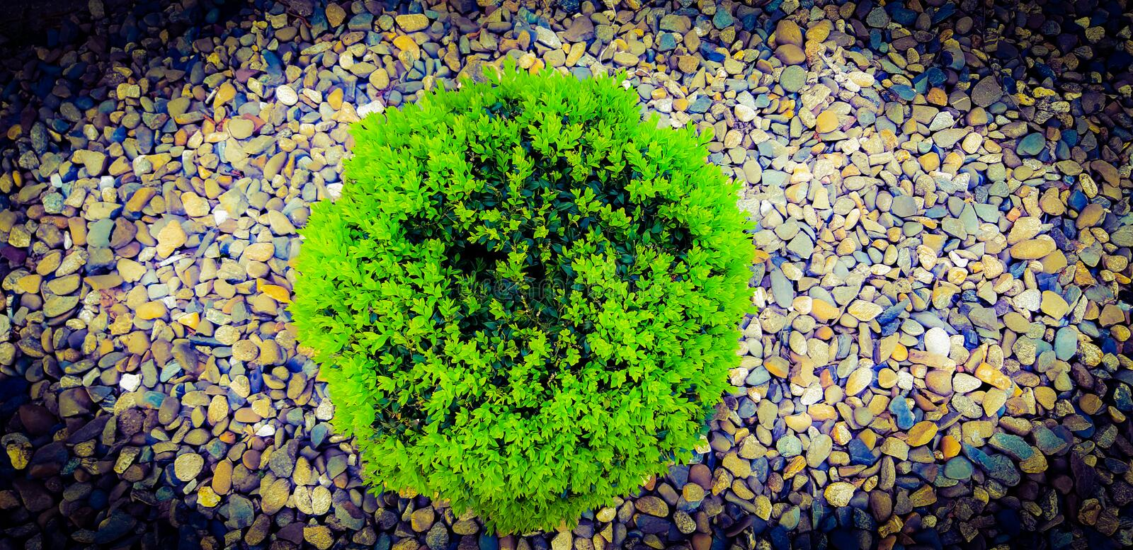 Charming green shrub with stones background! stock image