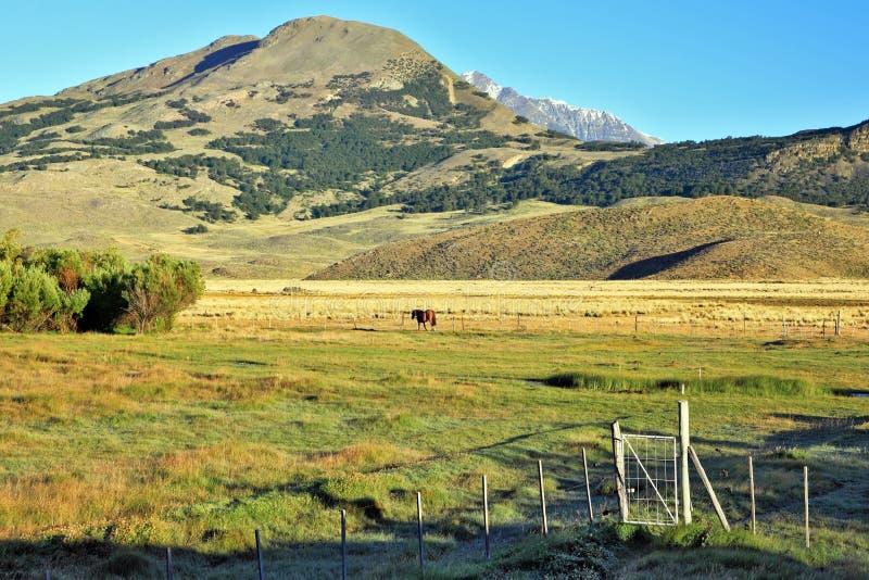 Charming green valley in Perrito Moreno's stock photo