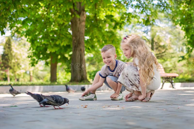 Charming happy children feeding pigeons stock photography