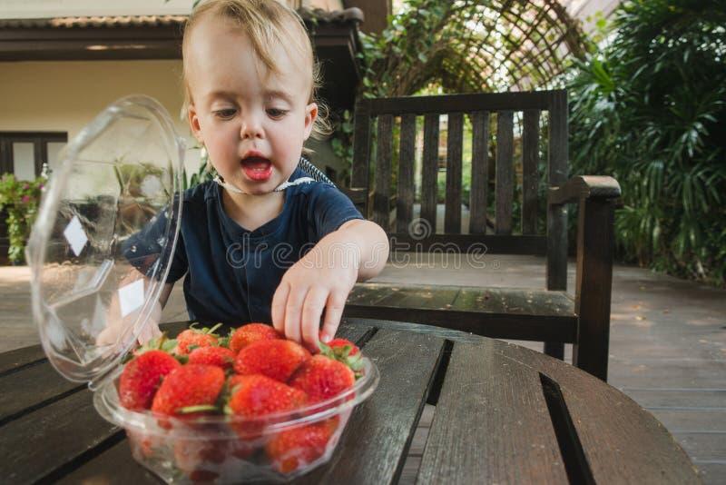 Little boy taking fresh strawberry stock photo