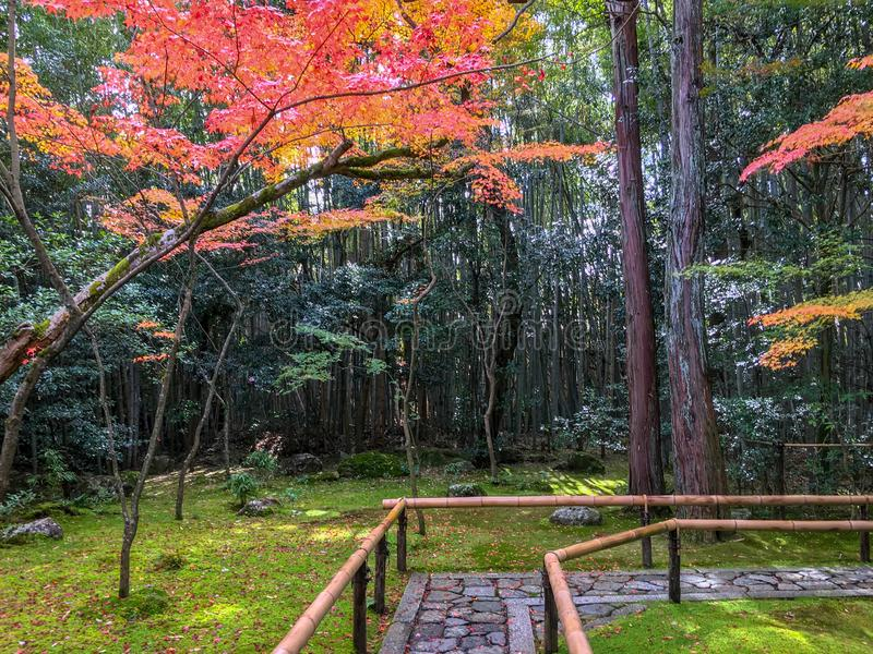 Charming scene of garden with colorful maple trees in front of japanese temple. Kyoto, Japan stock photo