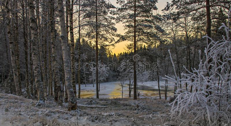 A charming winter morning in Sweden. Eith magical sunlight royalty free stock image