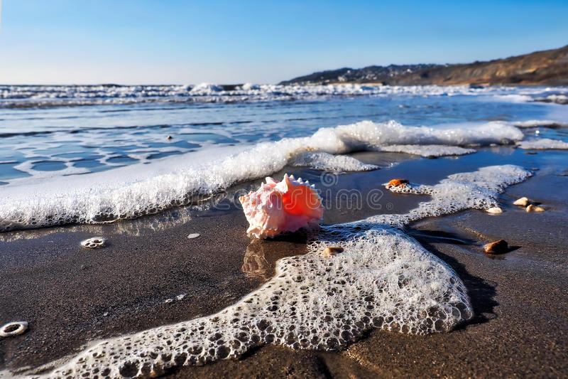 Charmouth Seascape With Rose Murex Shell royalty free stock image